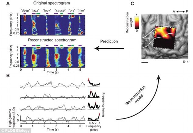 Brain Spectrogram