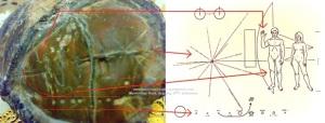 Pioneer Plaques.jpg