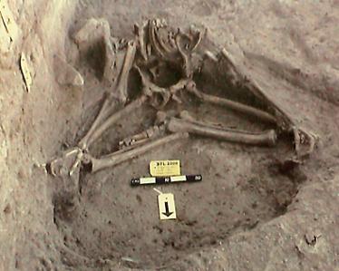 Yogi remains found in Harappa.