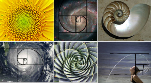 Fibonacci Series in Nature.Image.jpg