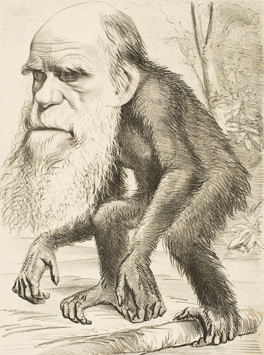 Charles Darwin Caricature.