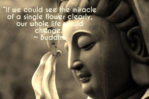 Buddha Quote.image